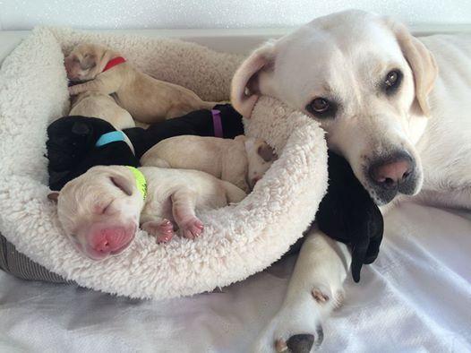 sugar-and-puppies