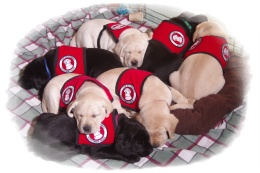 l-litter-group-shot-6-weeks-old