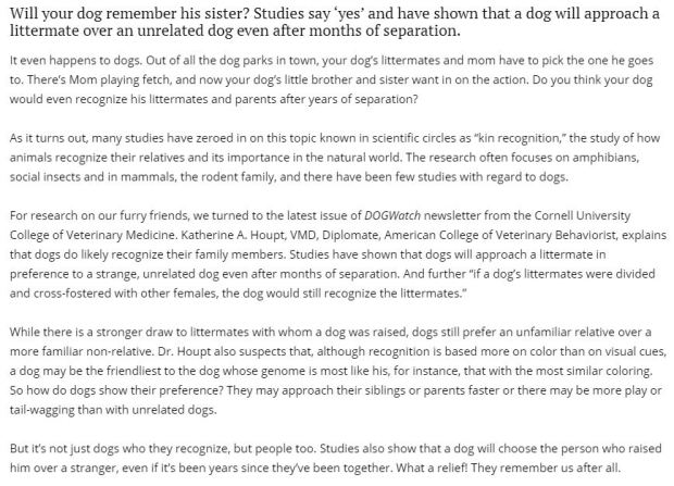 picture of article about dogs remembering relatives