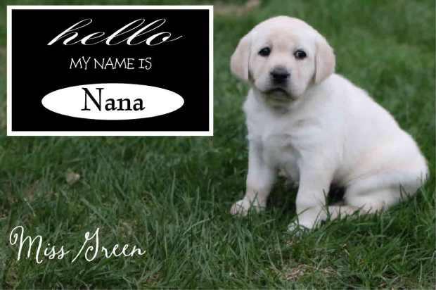 Nana Green