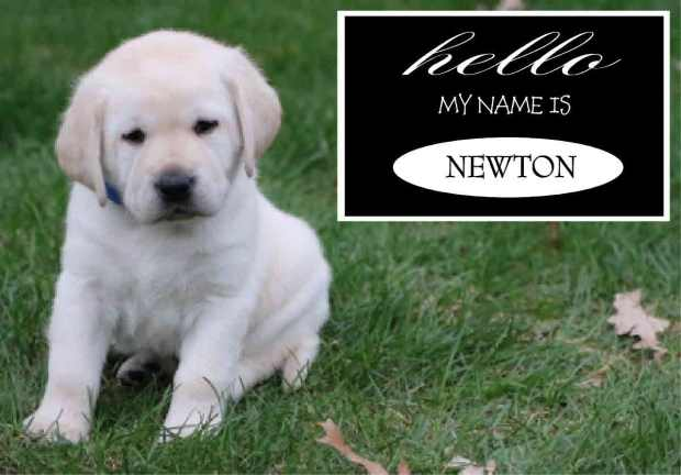 Newton Blue