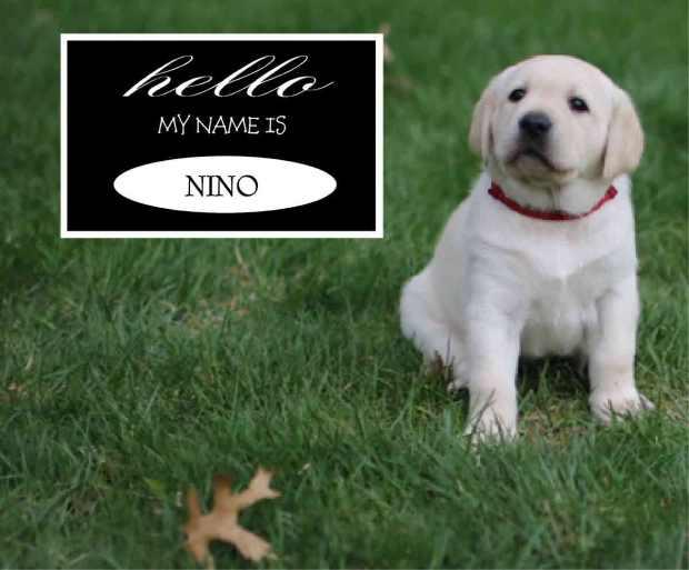 Nino Red